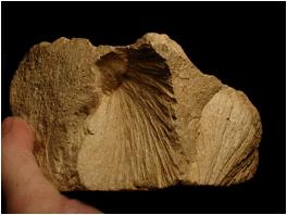 reverse shatter cones Malmian limestone Steinheim impact basin Germany