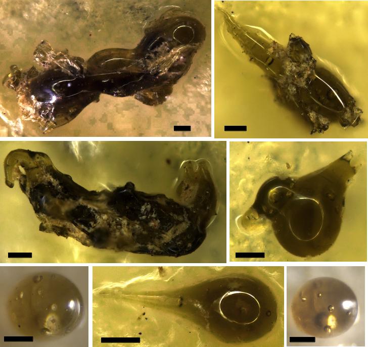 microtektites from the Chiemgau impact strewn field
